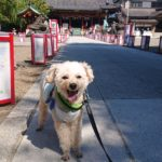 浅草神社へお散歩